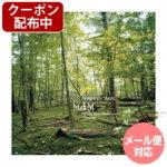MdM Music deep Meditation For YOGA ヒーリングミュージック 宮下富実夫 メール便