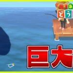 【あつ森】巨大レア魚を簡単に釣る方法【あつまれどうぶつの森】